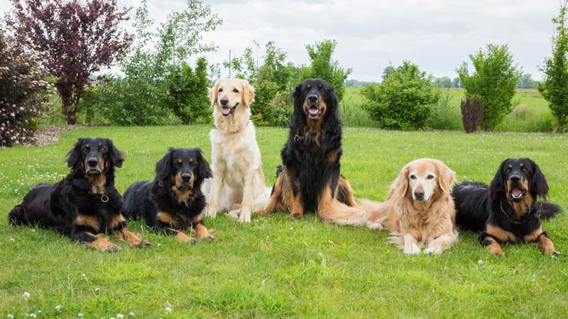 Unsere ersten 6 Hovawarte - Queena, Ansa, Gritta, Franco, Franzy, Ella