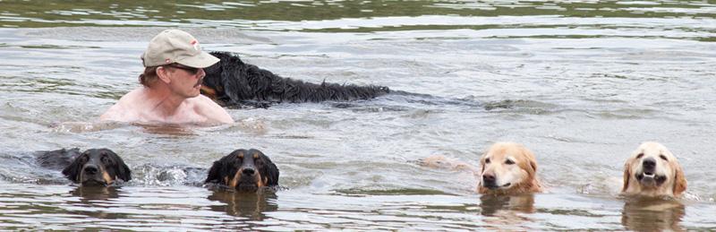 Das Düringer Moor Rudel - schwimmen im Main