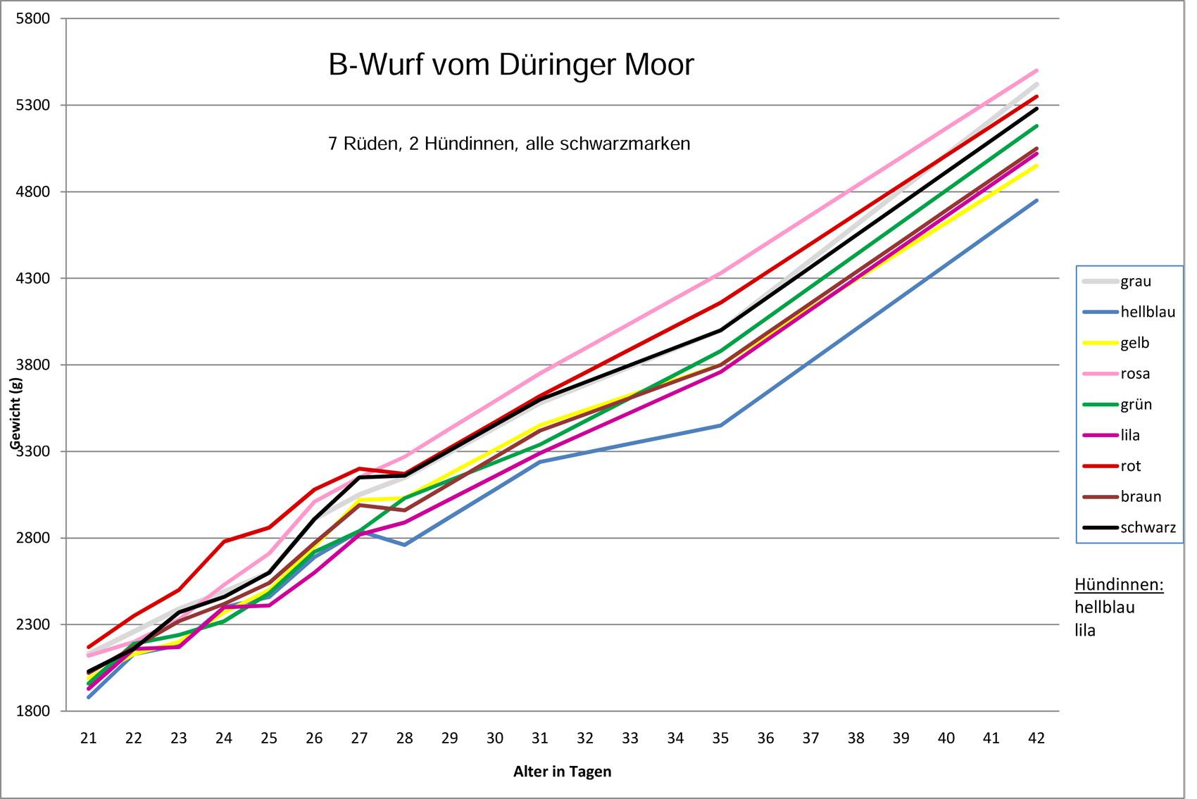 www.Hovawart-Welt.de