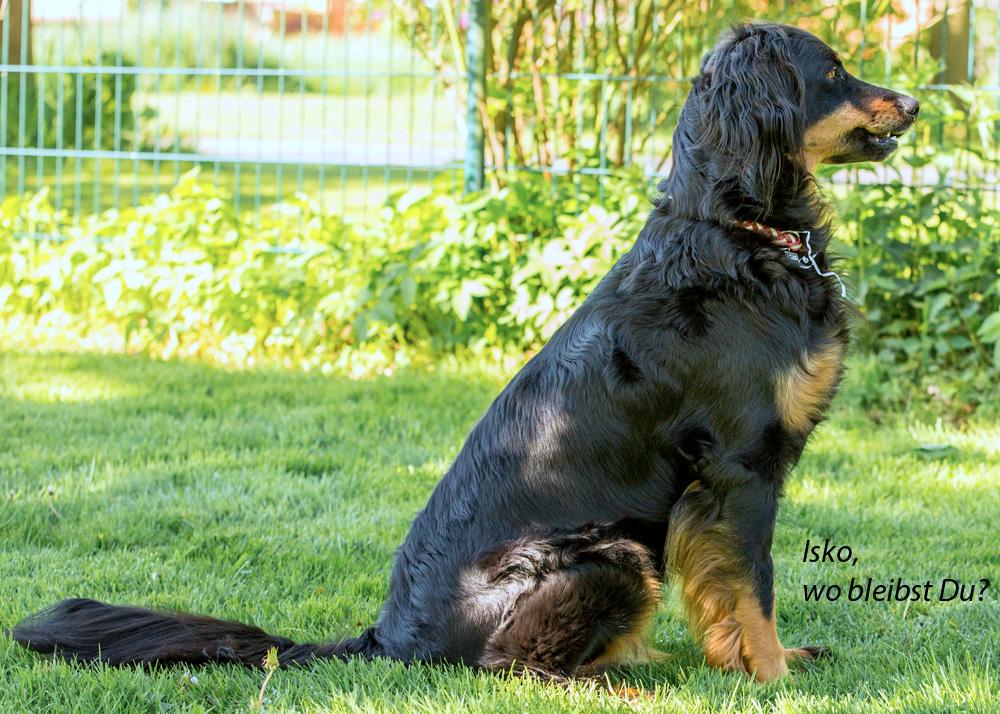 Ella vom Düringer Moor wartet auf Isko