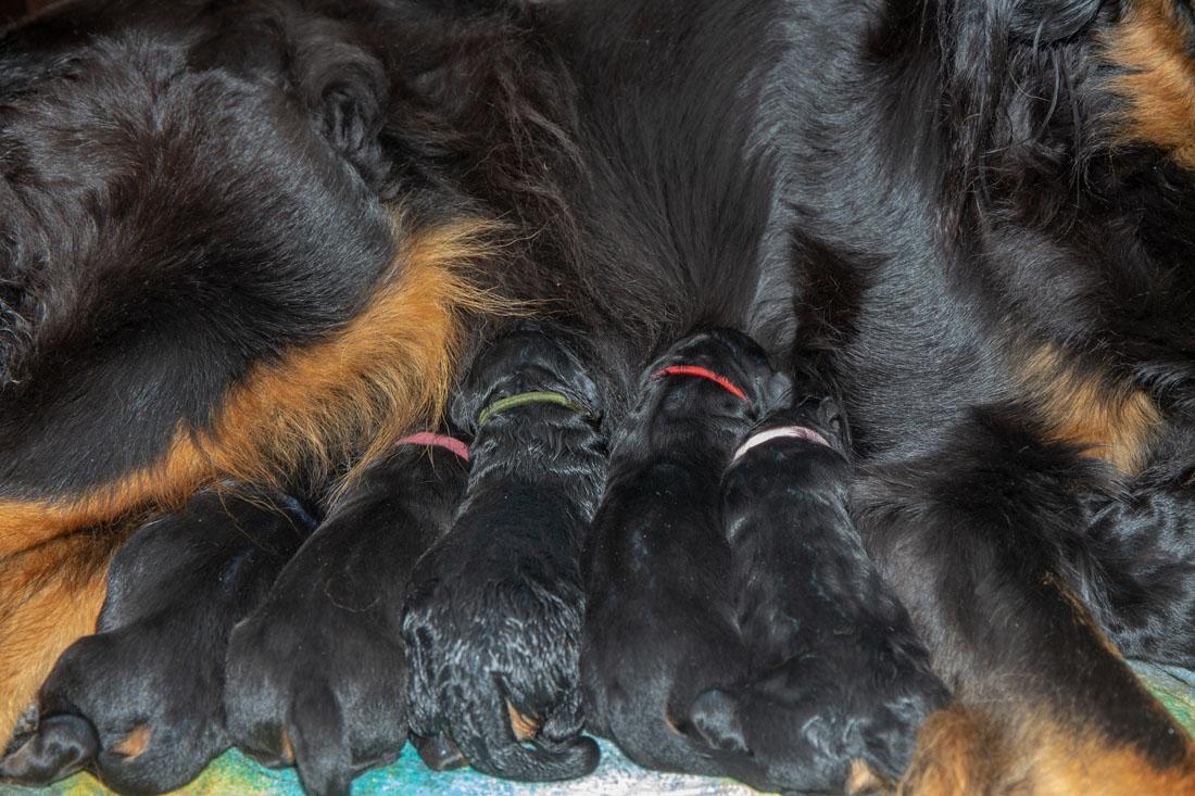 K-Wurf vom Düringer Moor - kurz nach der Geburt
