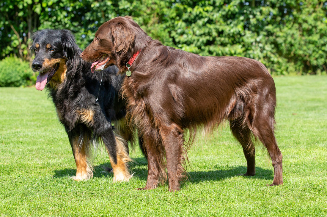 K-Wurf vom Düringer Moor --- Ansa fast 13 Jahre alt mit Barney