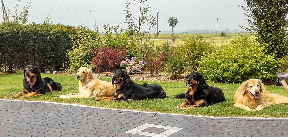 Hovawarte vom Düringer Moor - Juli 2016 - Besuch von Dagur mit Gritta, Ella, Ansa und Franzy