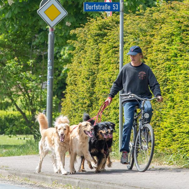 Hovawarte vom Düringer Moor- Mai 2019 - Radfahren