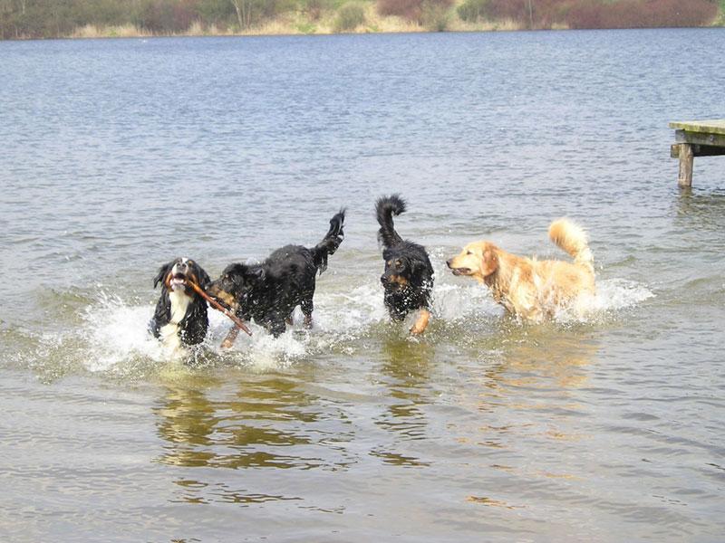 Hovawarte vom Düringer Moor - 2003 -Franzy beim Hundetreff