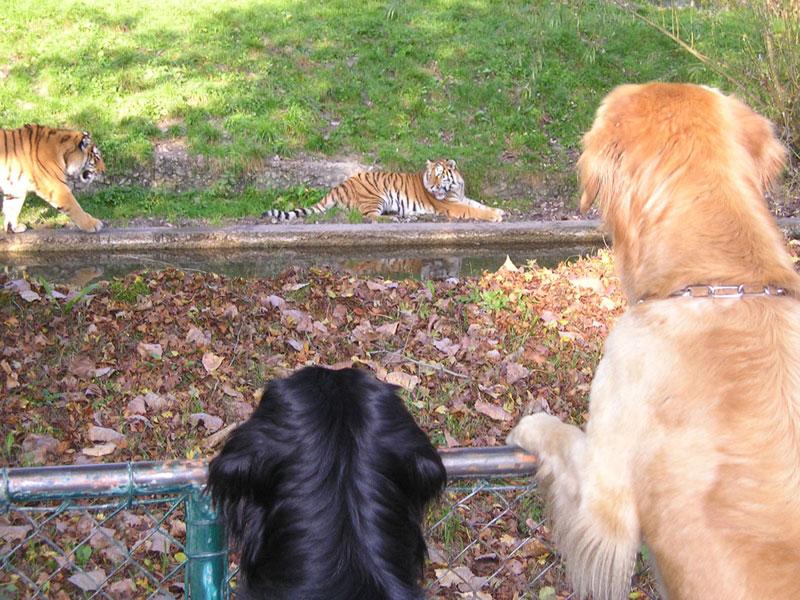 Hovawarte vom Düringer Moor - 2004 - Münchner Zoo