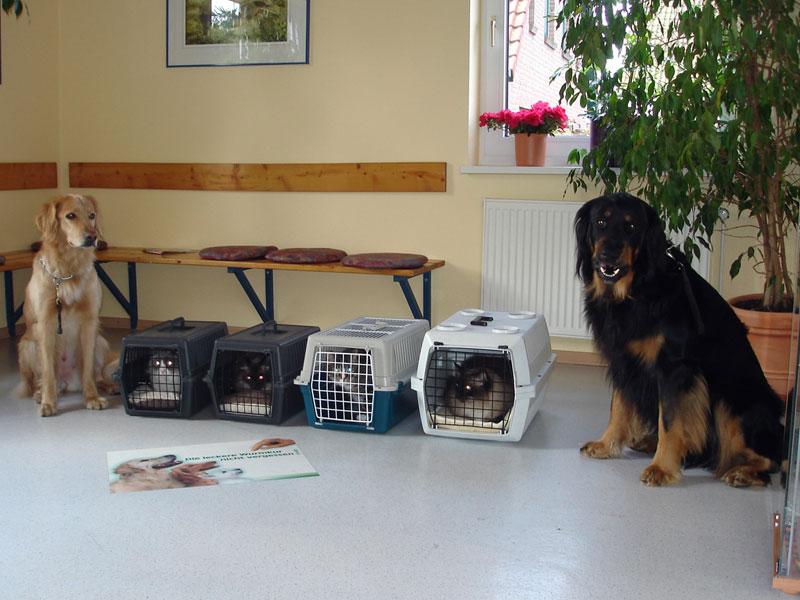 Hovawarte vom Düringer Moor - 2005: Beim Tierarzt