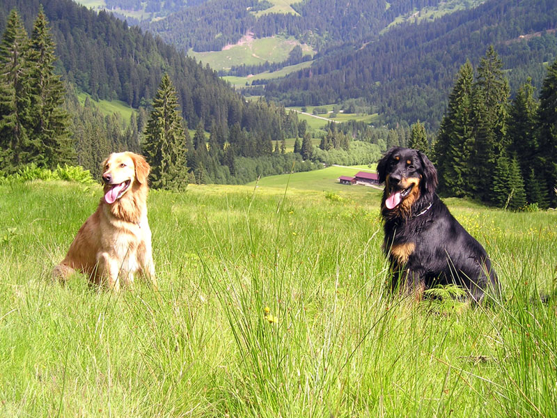 Hovawarte vom Düringer Moor - 2004 - Grüße aus Bayern