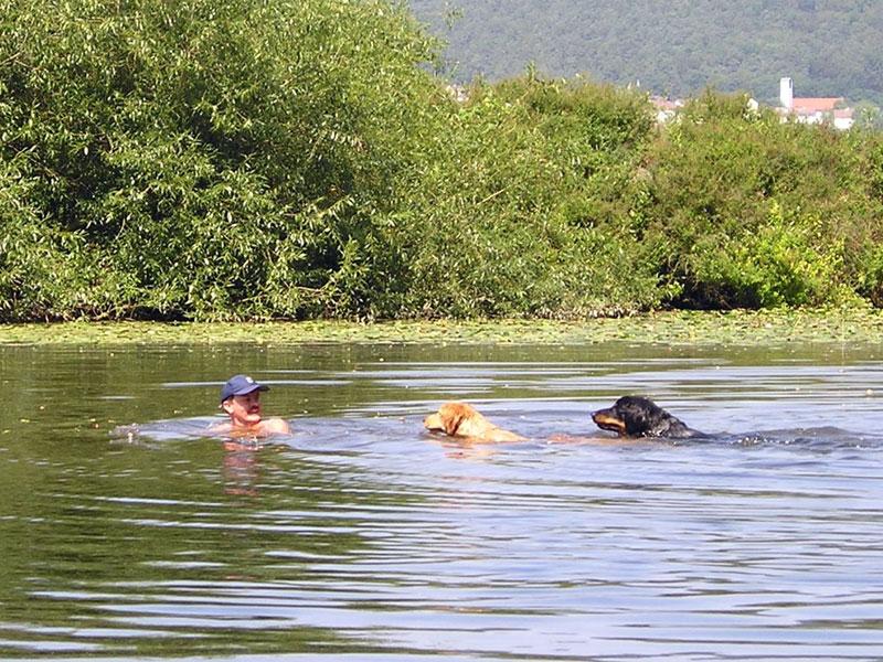 Hovawarte vom Düringer Moor - 2004 - Schwimmen in der Fulda mit Franzy und Franco