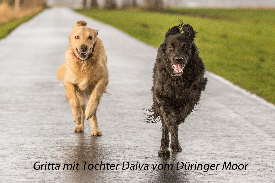 Hovawarte vom Düringer Moor - Januar 2017 - Gritta + Tochter Daiva