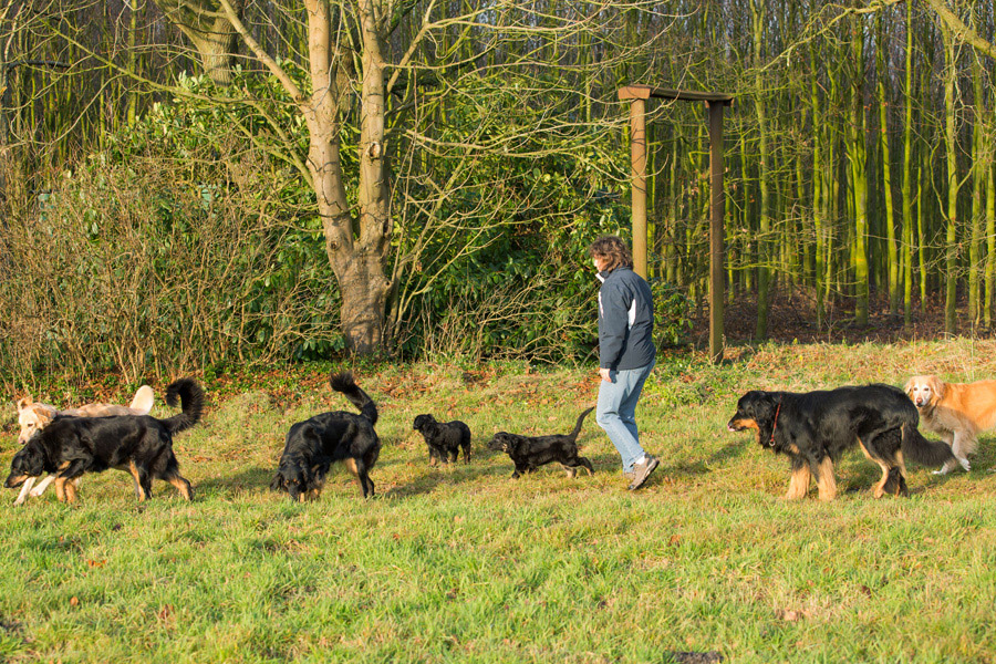 Hovawarte vom Düringer Moor - Herbst 2013 - Spaziergang mit unserem C-Wurf